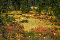 Autumn colors a meadow in the Indian Heaven Wilderness -Gifford Pinchot National Forest, Cascade Mountain Range, Washington state, USA