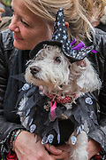 Lola a Westy Poodle - A charity Halloween Dog Walk and Fancy Dress Show organised by All Dogs Matter at the Spaniards Inn, Hampstead. London 29 Oct 2017.