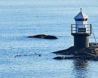 Common Eider (Somateria mollissima). Viewed from the deck of the MV Explorer, Stockholm Archipelago. Stockholm, Sweden. Image taken with a Nikon D4 camera and 80-400 mm VR lens.