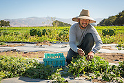 Victor Cortez is part of the incubator farm program at ALBA in Salinas, CA. He hopes to own his own organic farm soon.