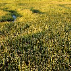Early morning on a salt marsh in Essex Massachusetts USA