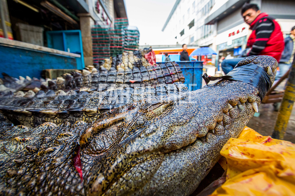 Exotic meat trade photo: paul hilton