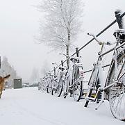 Nederland Rotterdam 21 december 2007 ..Man laat hond uit op een besneeuwd Noordereiland ...Foto David Rozing