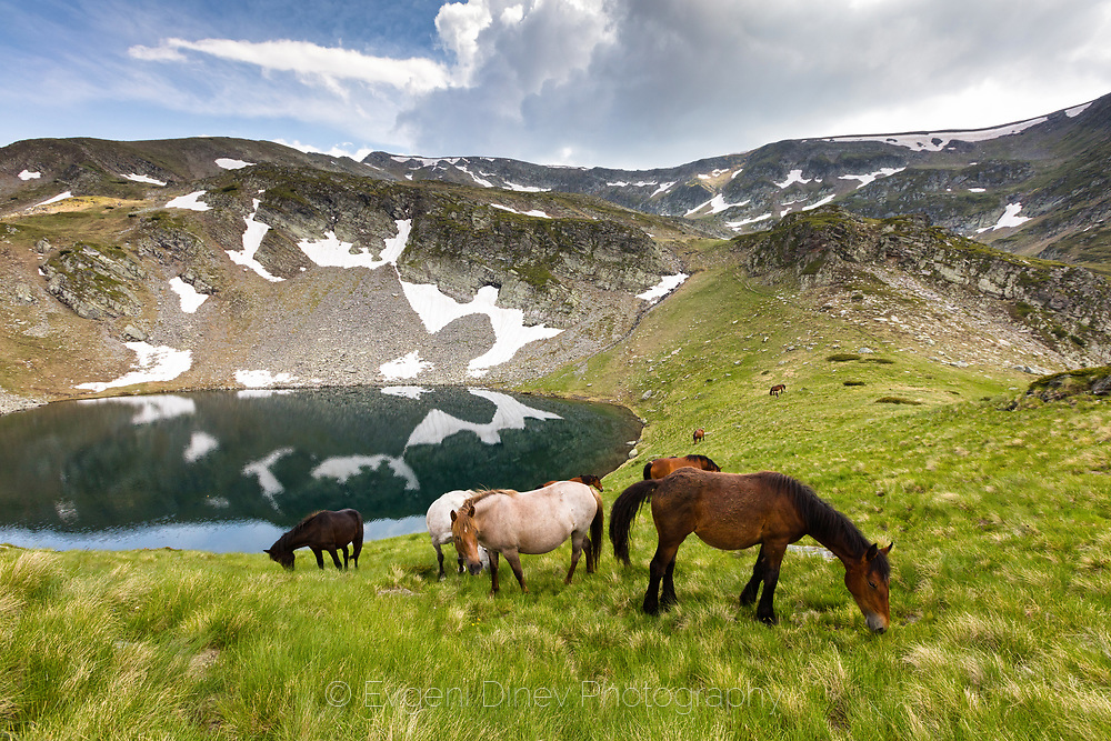 Herd of horses passing by the lake in Rila Mountain