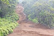 Rain on popular hiking trail Pihea Trail, in Kokee State Park, Kauai, Hawaii.