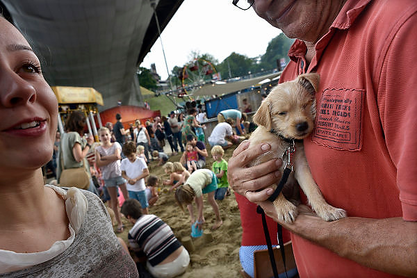 Nederland, Nijmegen, 12-7-2014Recreatie, ontspanning, cultuur en theater op het festival de Kaaij onder de waalbrug in de stad aan de rivier Waal tijdens de zomerfeesten. Een bezoeker loopt met zijn pup,puppy, jonge hond, op het terrein. Een van de vele feestlocaties in de stad. De vierdaagsefeesten zijn het grootste evenement van Nederland.Foto: Flip Franssen/Hollandse Hoogte