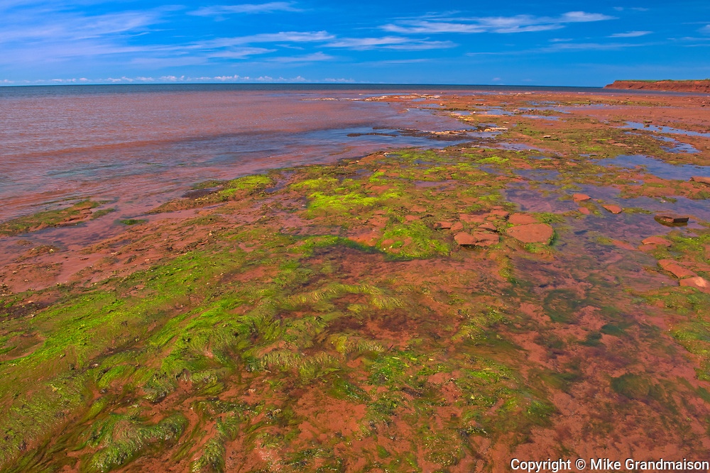 Red sandstone beach and algae at low tide<br />