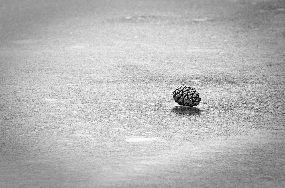 This pine cone was sitting on top of the frozen pond.  It looked lonely and isolated, looking at its own shadow.