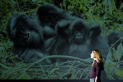 The world-renowned Wildlife Photographer of the Year exhibition, on loan from the Natural History Museum in London, returns to Edinburgh, opening at the National Museum of Scotland on Friday 19 January 2018 until 29 April 2018.<br />  <br /> Taking over the Museum's largest exhibition gallery for the first time, this will be the only Scottish venue for the exhibition. The 100 extraordinary images celebrate the diversity of the natural world, from intimate animal portraits to astonishing wild landscapes.<br /> <br /> Pictured: Kick Back and Chill by Alan Chung