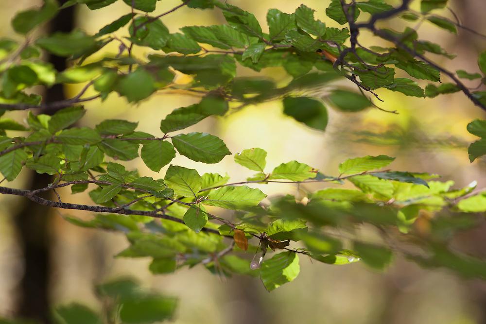 Leaves in sunlight.