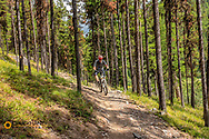 Mountain biking on the Lupine Lake Trail in the Flathead National Forest, Montana, USA MR