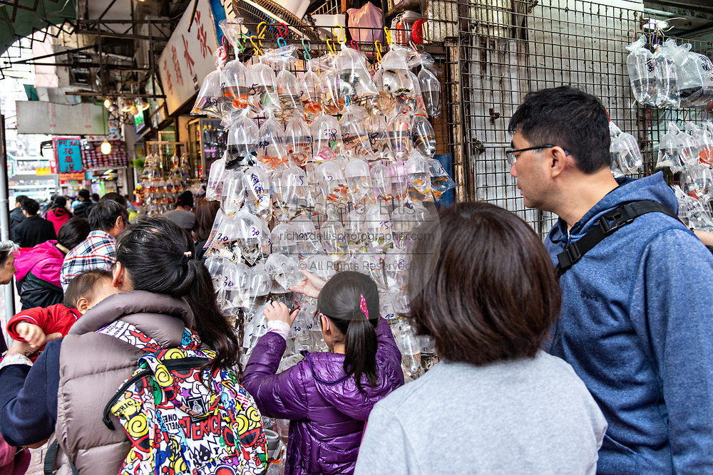 People shop for goldfish on display at the Tung Choi Street North, better known as the Goldfish Market in the Mong Kok district of Kowloon, Hong Kong. Chinese traditionally believe that goldfish are good Feng shui an an auspicious item that can bring good luck to a home.