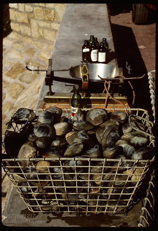 Basket of clams beside scale and bottles of beer; annual clam harvest at Le Bono, Auray River. France