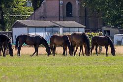 Het Trichelhof, jaarlingen<br /> het Trichelhof - Eindhout 2020<br /> © Hippo Foto - Dirk Caremans<br />  13/06/2020