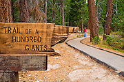 Trail of a Hundred Giants (hiker visible), Giant Sequoia National Monument, Sierra Nevada Mountains, California