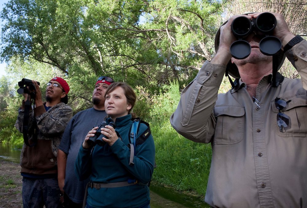 Frank Toupal, April Howard, Jeffery McFadden and Daniel Juan observe a flycatcher during the 17th Annual Southwestern Willow Flycatcher Survey Training Workshop field trip held on the lower San Pedro River near Dudleyville. The bird was listed as endangered in 1995 as its riparian homes fell victim to growth and overused rivers. The Wildlife Service designated critical habitat areas for the bird and created a recovery plan, and in 2004, agency scientists proposed designating about 376,000 acres of habitat for the flycatcher.