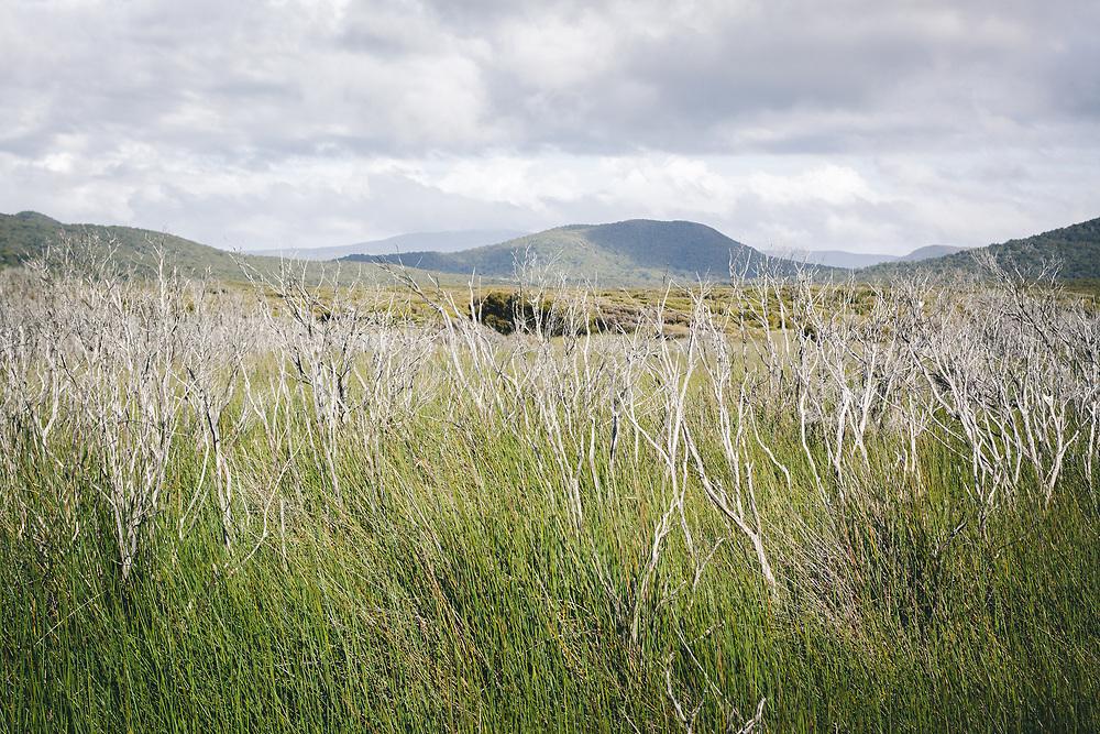Dry bushes skeletons in marshes, The Southern Circuit, Stewart Island / Rakiura, New Zealand Ⓒ Davis Ulands | davisulands.com