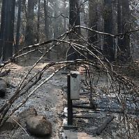 CZU AUGUST LIGHTNING COMPLEX<br /> Damage to Big Basin State Park<br /> Friday August 28, 2020<br /> (Shmuel Thaler - Santa Cruz Sentinel)