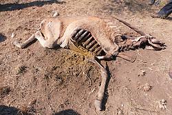 Dead Eland