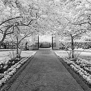 Shakespeares Garden - Golden Gate Park - San Francisco - Black & White