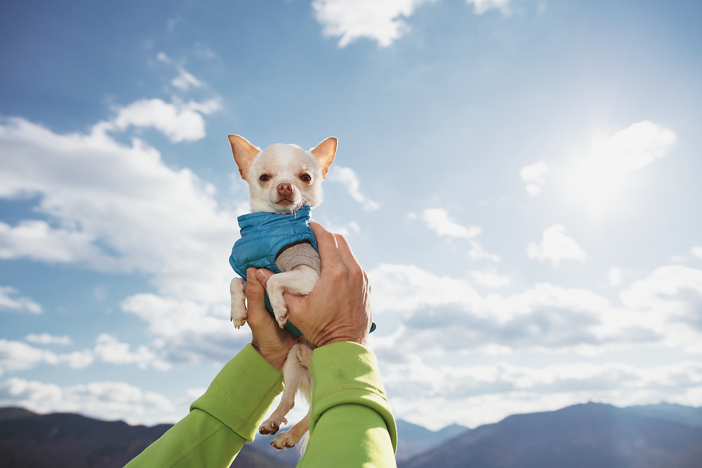 teacup Chihuahua being held up to the sky with two hands wiht mountains in the background