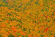Acadian forest in autumn foliage <br />Cape Breton Highlands National Park<br />Nova Scotia<br />Canada
