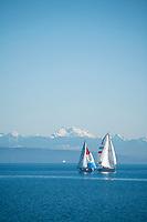 Sailboats in the Hood Canal, Washington.