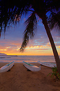 Coconut Palm Tree and Rowing Boats on the Beach at North Shore in Hawaii