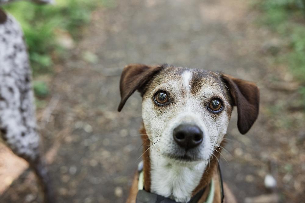 headshot of a small dog looking up at camera
