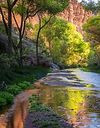 Towering cliffs and lush vegetation reflect warm morning light  in Aravaipa Creek.