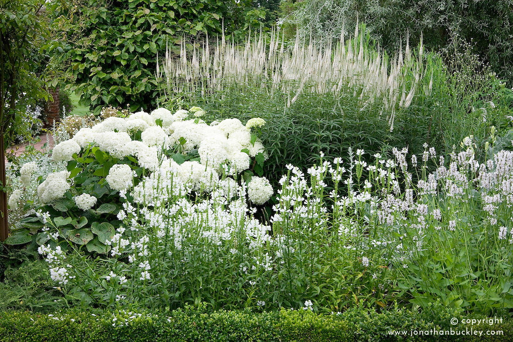 Border in the White Garden at Sissinghurst Castle. Planting includes Physostegia virginiana 'Alba', Physostegia virginiana 'Alba', Hydrangea 'Annabelle' and Veronicastrum