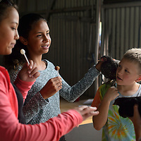 Izzy Kruis, left, and Rue Kruis pet the show chickens of Garrett Balok, right, and Caleb Balok in the rabbit and poultry hall Friday at the Bi-County Fair in Prewitt.