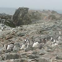 Half Moon Island, Antarctica.