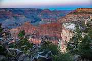 Dusk seen through gnarly pine trees at Mather Point Overlook, Grand Canyon National Park, Arizona, USA. Starting at least 5 to 17 million years ago, erosion by the Colorado River has exposed a column of distinctive rock layers, which date back nearly two billion years at the base of Grand Canyon. While the Colorado Plateau was uplifted by tectonic forces, the Colorado River and tributaries carved Grand Canyon over a mile deep (6000 feet), 277 miles  long and up to 18 miles wide.
