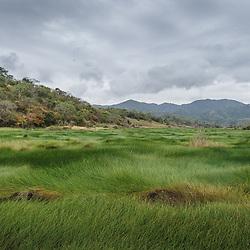 Flora de Angola