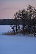 Winter landscape with small peninsula overgrown with black alders (Alnus glutinosa) in frozen lake Sloka, Kemeri National Park (Ķemeru Nacionālais parks), Latvia Ⓒ Davis Ulands   davisulands.com