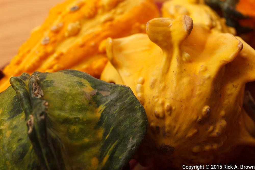 USA, Oregon, Keizer, gourds.