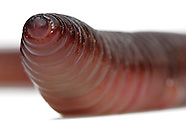 FEATURE: Earth Worms