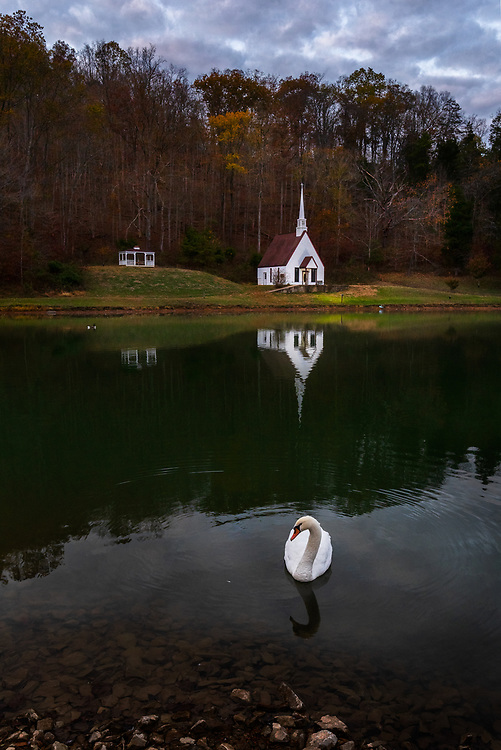 A swan poses in front of an idyllic church on a lake near Romance, West Virginia.