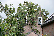 Nederland, Groesbeek, 28-10-2013Herfststorm doet boom op huis vallen in de Generaal Gavinstraat. Stormschade.Foto: Flip Franssen/Hollandse Hoogte