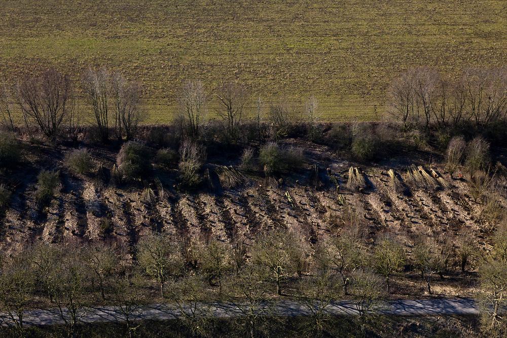 Nederland, Betuwe, Gemeente Culemborg, 07-03-2010; Beesd, Lage Veld; wilgentnen (?), rijshout.luchtfoto (toeslag), aerial photo (additional fee required).foto/photo Siebe Swart