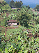 Small village in the hillside in Nyungwe National Park, Rwanda