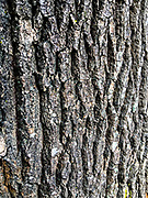Bark tree backround in the day.