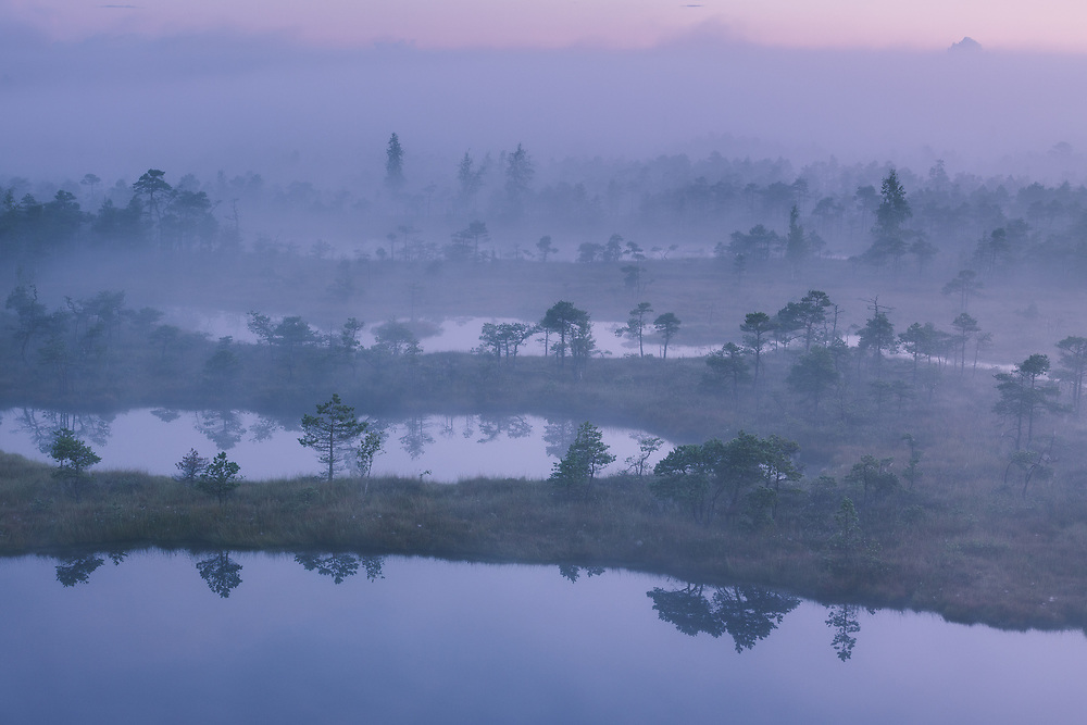 A thick layer of fog covers the raised bog with narrow bog pools before the sunrise, Kemeri National Park (Ķemeru Nacionālais parks), Latvia Ⓒ Davis Ulands | davisulands.com