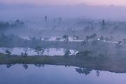 A thick layer of fog covers the raised bog with narrow bog pools before the sunrise, Kemeri National Park (Ķemeru Nacionālais parks), Latvia Ⓒ Davis Ulands   davisulands.com