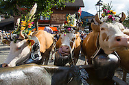The annual Alpine Cow Descent in Gstaad.  Gstaad is a bilingual village in the German-speaking section of the Canton of Bern in southwestern Switzerland. It is part of the municipality of Saanen and is known as a major ski resort and a popular destination amongst the high society and the international jet set.