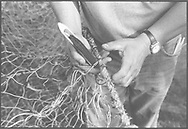 Salmon netters repairing a 'jumper' net to be stored away at the end of the season at Kinnaber, Angus.<br /> Ref. Catching the Tide 54/00/26a (4th September 2000)<br /> <br /> The once-thriving Scottish salmon netting industry fell into decline in the 1970s and 1980s when the numbers of fish caught reduced due to environmental and economic reasons. In 2016, a three-year ban was imposed by the Scottish Government on the advice of scientists to try to boost dwindling stocks which anglers and conservationists blamed on netsmen.
