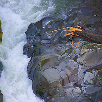 The Carbon river leaves reminders of its power as it leaves Mt. Rainer and travels towards the Puget Sound