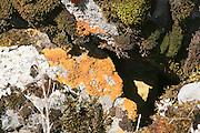 Africa, Ethiopia, Oromia Region, Bale Mountains Rust Lichens on a rock