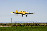 04 MARCH 2010 - CHANDLER, AZ: A crop duster sprays a farm field in Chandler, AZ.   PHOTO BY JACK KURTZ